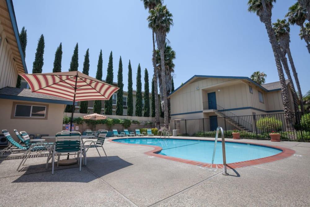 Resort-style swimming pool at Cedartree Apartments in Santa Clara, California