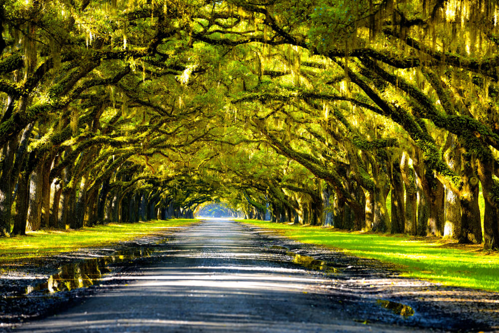 Beautiful scenery near Canal1535 in New Orleans, Louisiana.