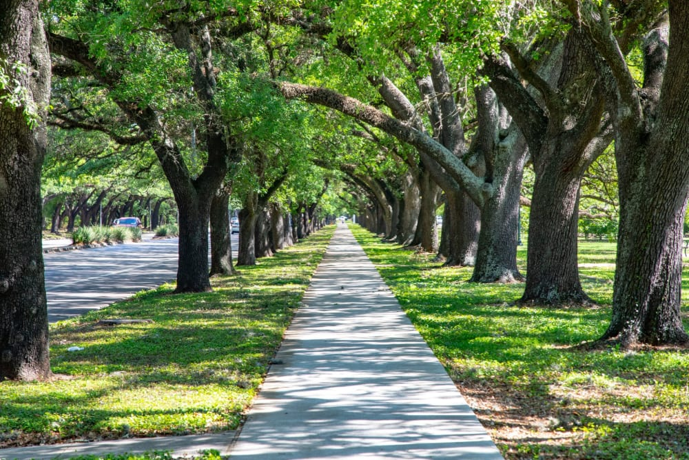 A shaded sidewalk near The Village of Southampton in Houston, Texas