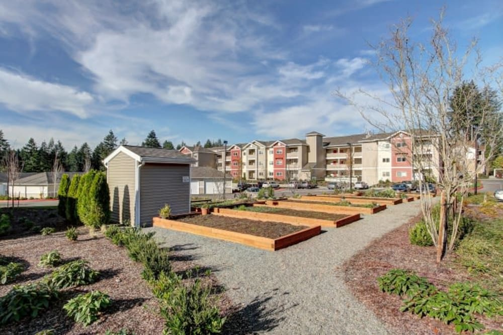 Community garden beds for residents at LARC at Olympia in Olympia, Washington