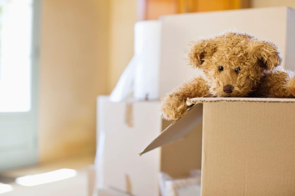 A stuffed animal in a box headed to AAA Self Storage at Pleasant Ridge Rd in Greensboro, North Carolina.