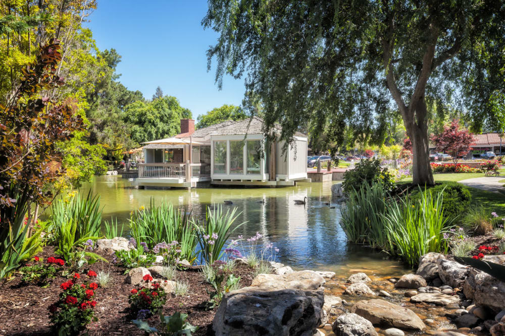 Large trees next to pond at Glenbrook Apartments in Cupertino, California