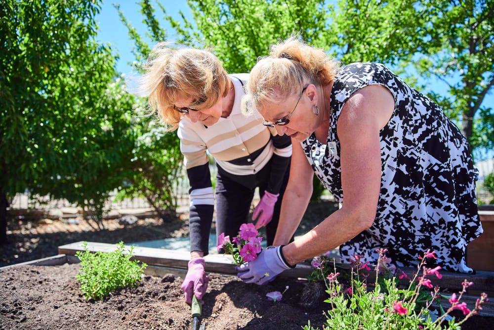 Resident gardening at Arbors Memory Care in Sparks, Nevada