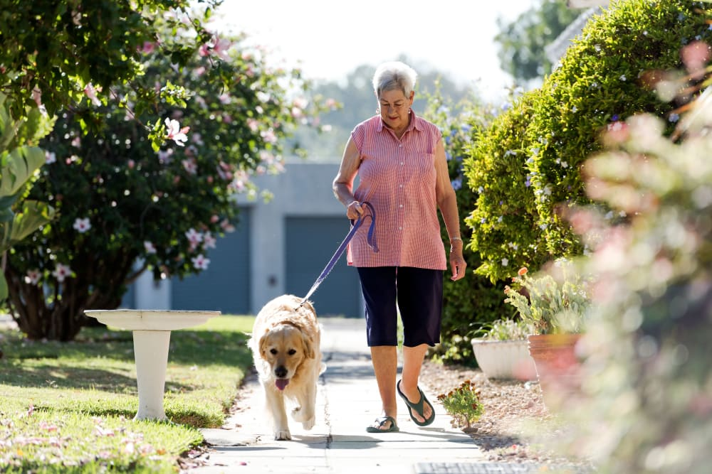 Resident walking their dog at Keystone Place at Terra Bella in Land O' Lakes, Florida