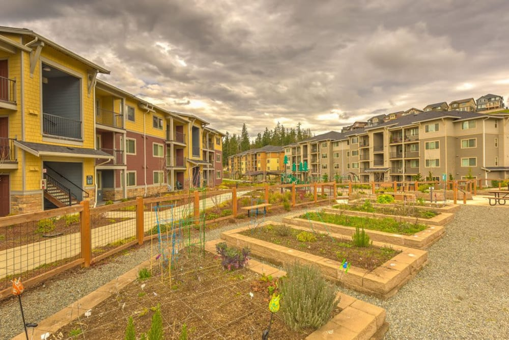 Community garden with plenty of garden beds at Vue Issaquah in Issaquah, Washington