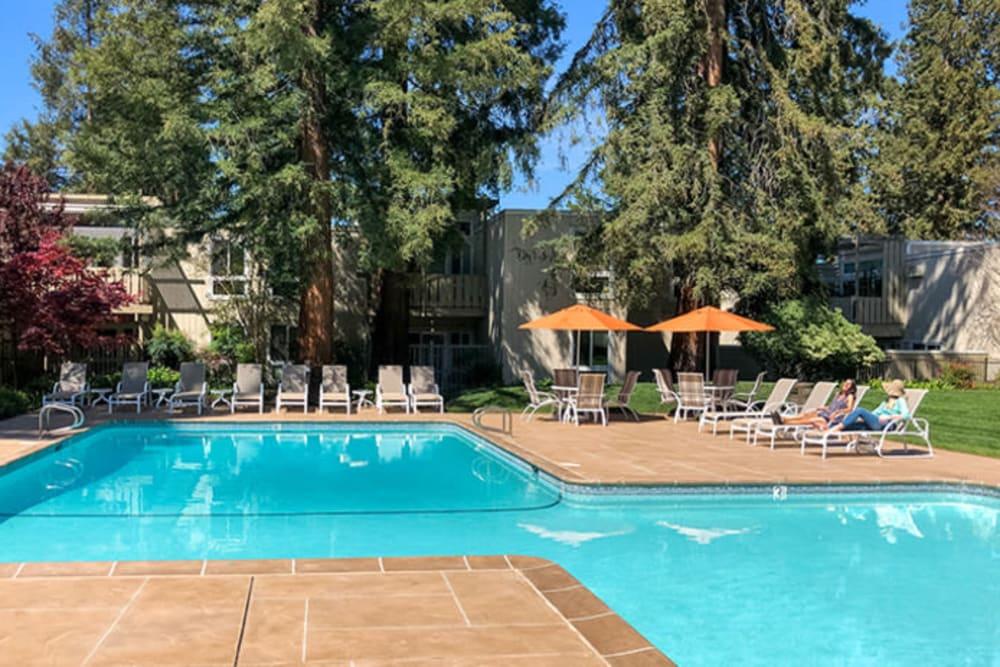 Stunning swimming pool at Brookdale Apartments in San Jose, California