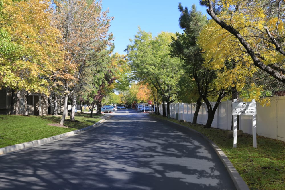 Tree-lined driveway leading up to our community at Overlook Point Apartments in Salt Lake City, Utah