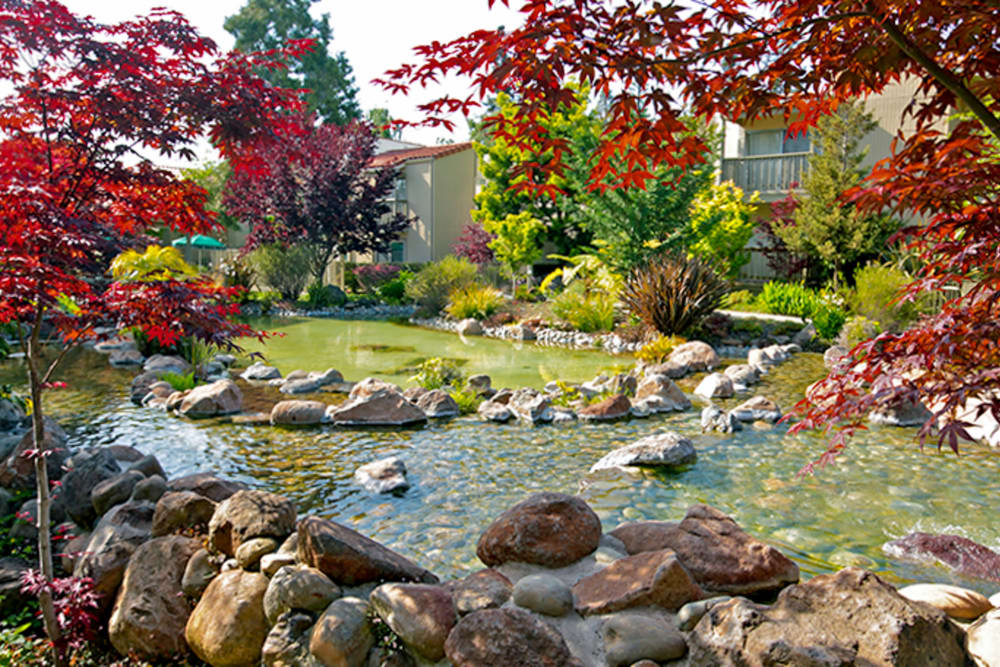 Beautiful landscaping at Spring Creek Apartments in Santa Clara, California