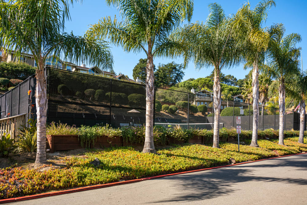 Palm trees and professionally maintained landscaping outside the tennis courts at Harbor Point Apartments in Mill Valley, California