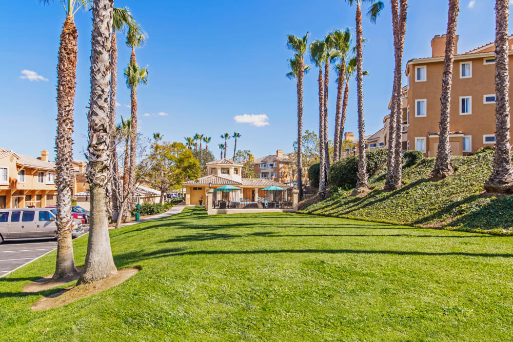 Green grass and palm trees at Sofi Canyon Hills in San Diego, California