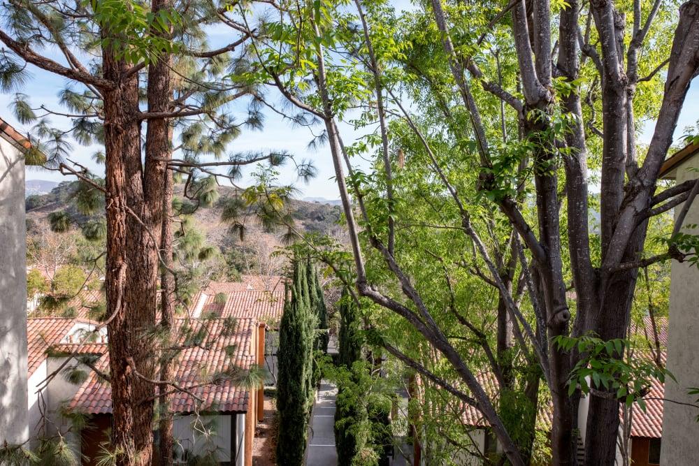 Mature trees providing ample shade in the neighborhood at Sofi Thousand Oaks in Thousand Oaks, California