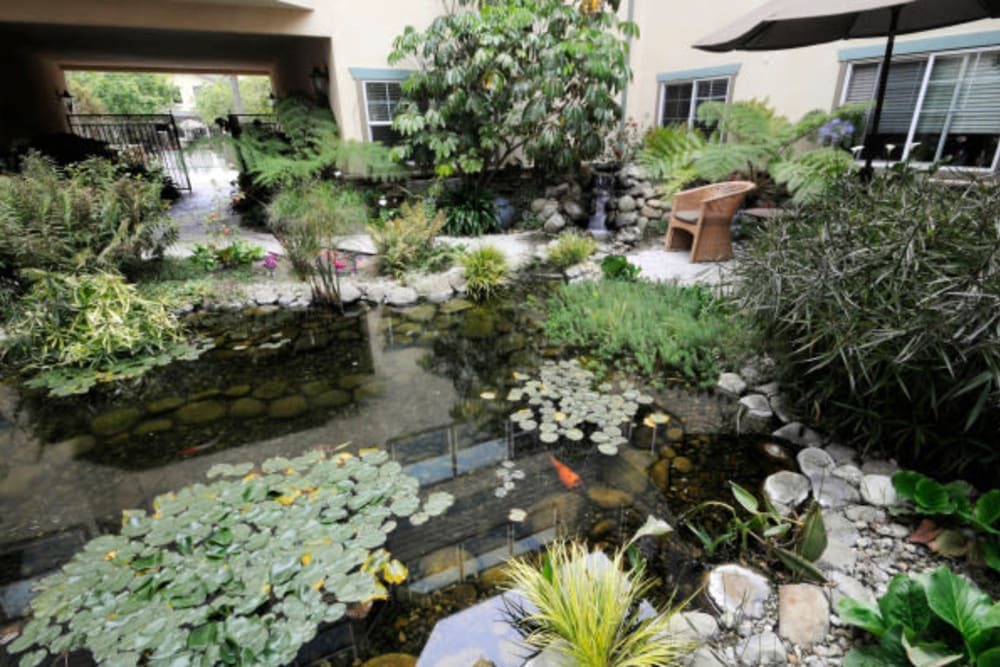 Koi pond at the center of the community courtyard at Cypress Place in Ventura, California
