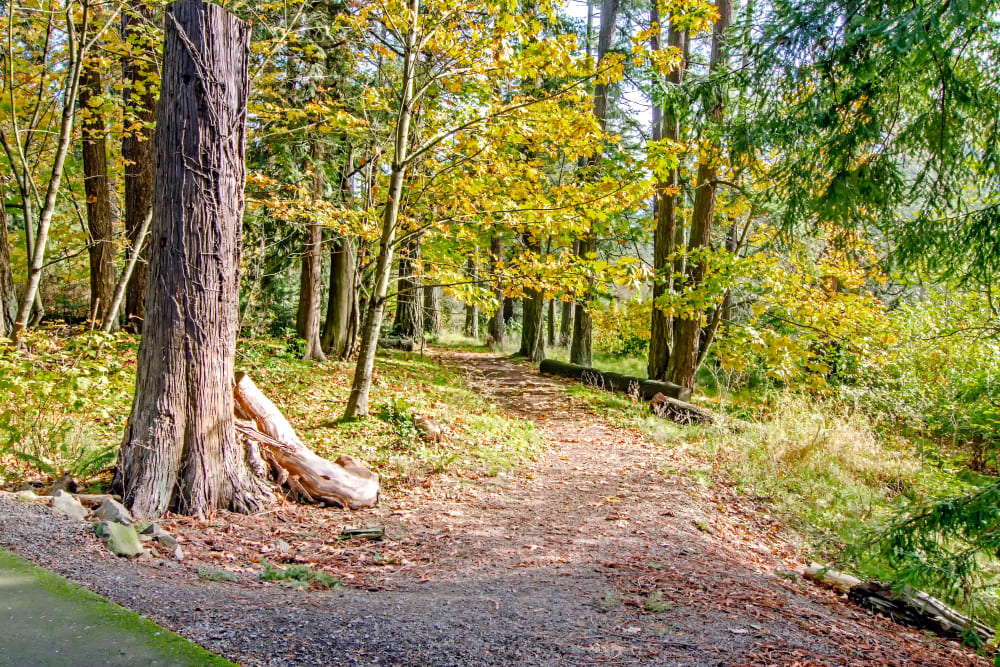 Wooded entrance to one of the beautiful forest trails at Sofi at Cedar Mill in Portland, Oregon