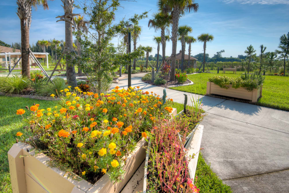 Flower beds and walking paths at Inspired Living at Hidden Lakes in Bradenton, Florida