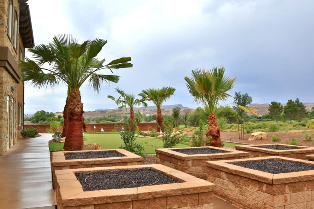 Many palm trees outside of The Retreat at Sunbrook in St. George, Utah