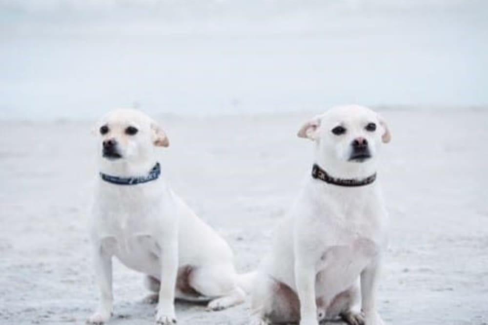 Beth's dogs near Inspired Living.