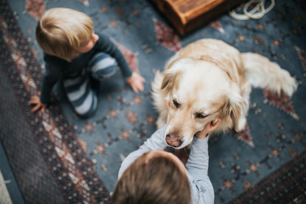 Children petting a dog at Artisan Living Bella Citta in Davenport, Florida