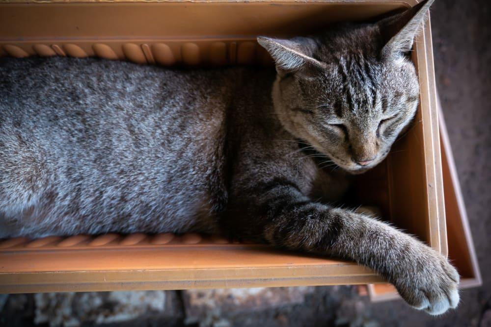 A cat relaxing in a pot at Artisan Living Bella Citta in Davenport, Florida