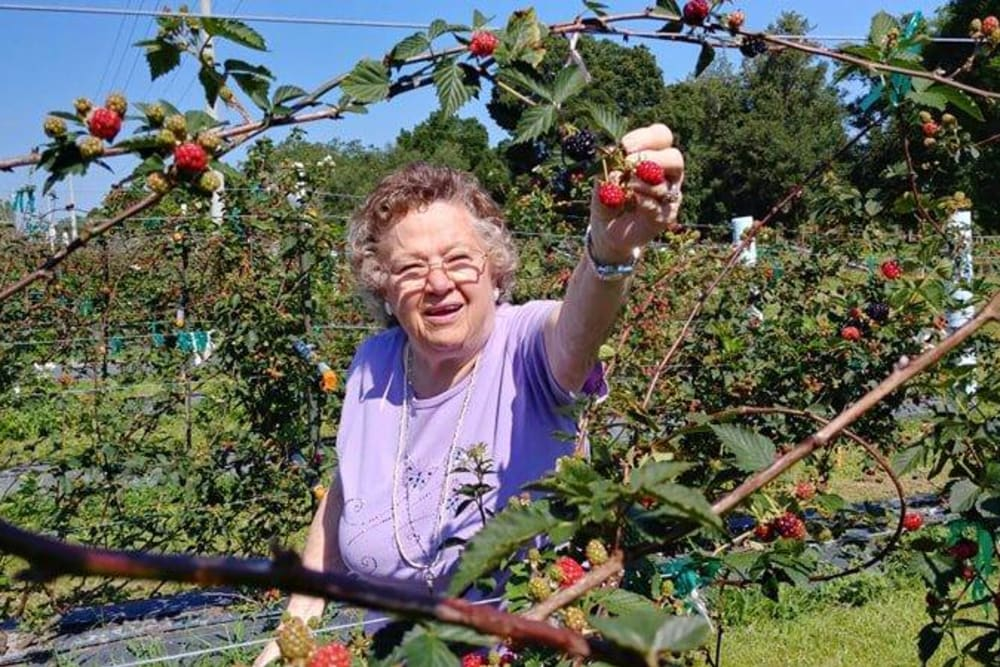 A resident picking fruit at The Grande in Brooksville, Florida