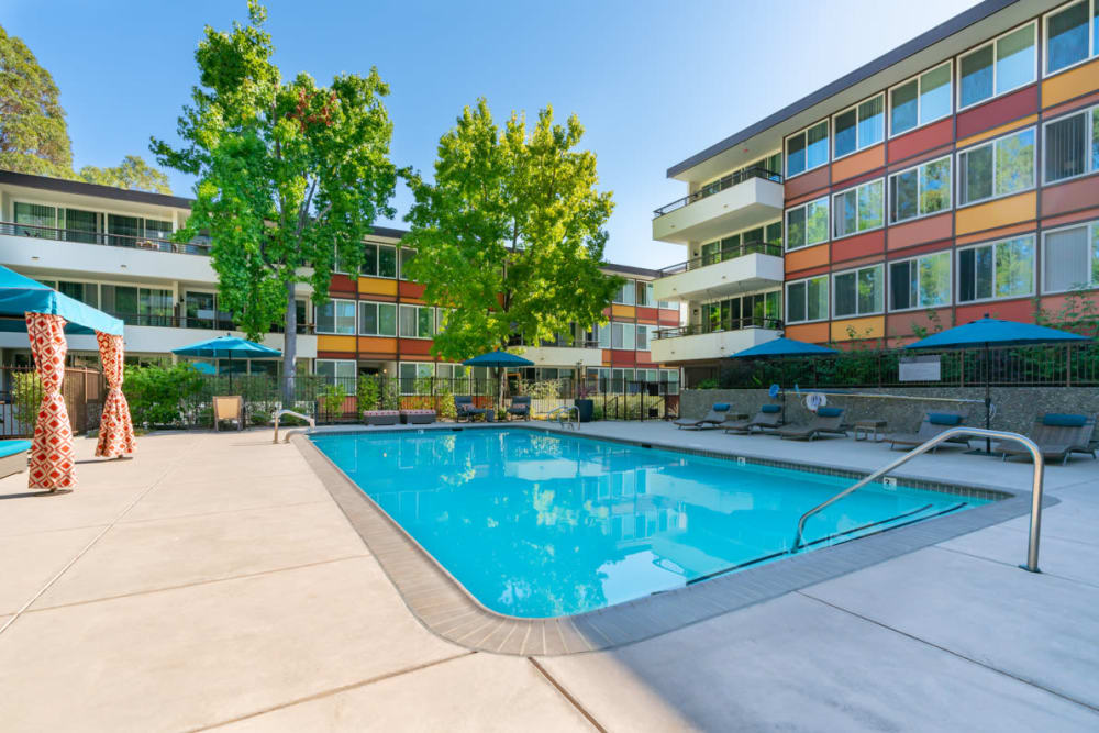 Sparkling swimming pool with mature trees nearby at Sofi Belmont Glen in Belmont, California