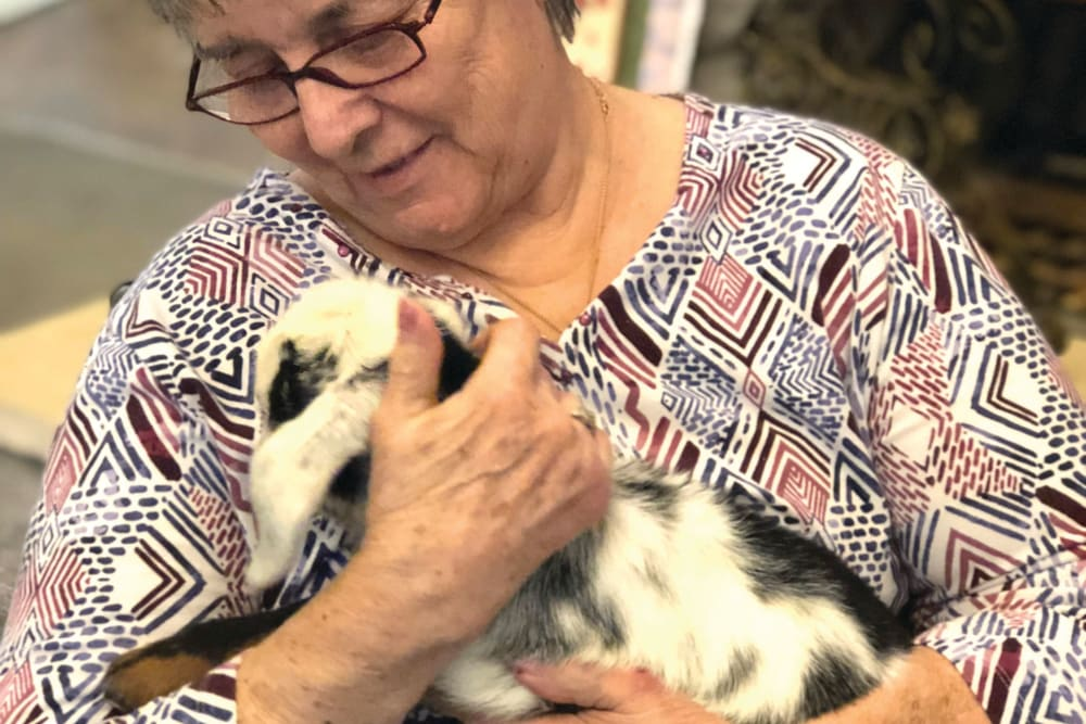 Senior woman holding rabbit