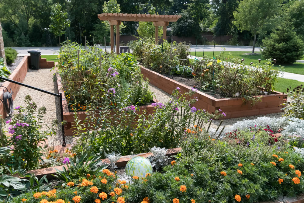 Resident garden at Applewood Pointe Bloomington at Valley West in Bloomington, Minnesota.