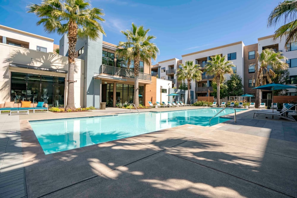 Our Apartments in San Jose, California offer a Swimming Pool