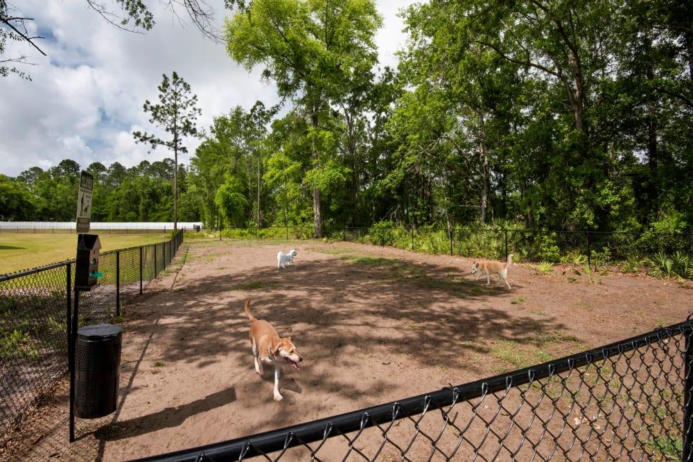 Onsite bark park at The Enclave in Brunswick, Georgia