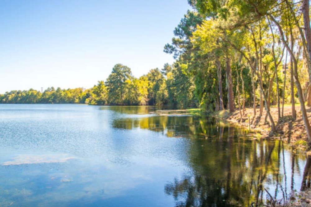 Serene lake with mature trees along the shore at Walden at Chatham Center in Savannah, Georgia