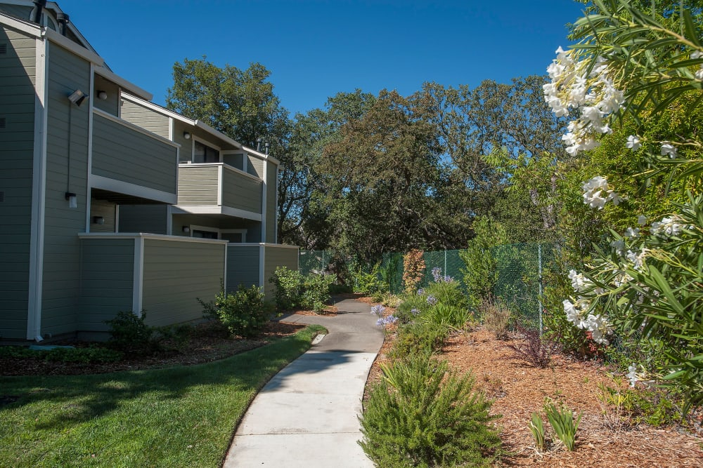Manicured landscape at Ridgecrest Apartment Homes in Martinez, California