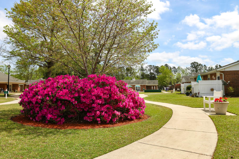 A walkway going around a large bush of flowers near Courtyards at Berne Village in New Bern, North Carolina