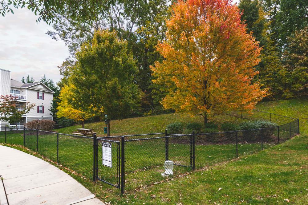 Onsite dog park at Sunchase at James Madison in Harrisonburg, Virginia