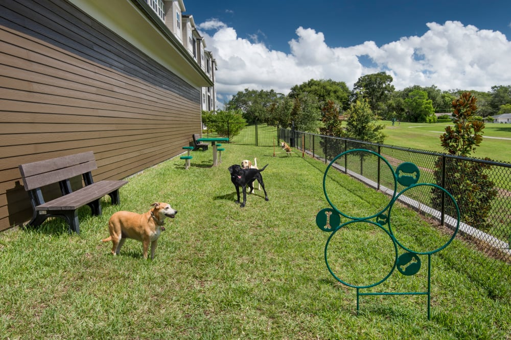 On site dog park area with agility equipment at Integra Lakes in Casselberry, Florida