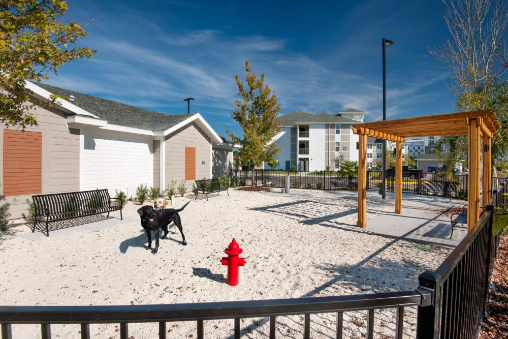 On site dog Park at Linden Crossroads in Orlando, Florida