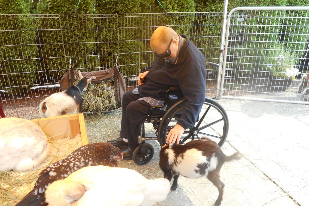 A resident petting an animal at Patriots Glen in Bellevue, Washington.
