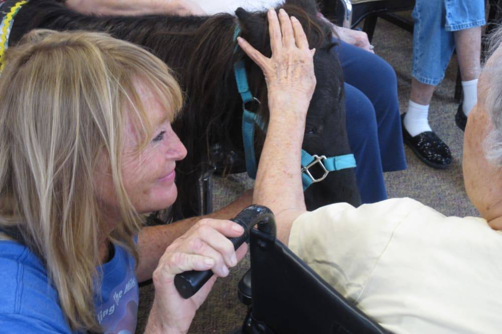 Petting ponies at Woodland Palms Memory Care in Tucson, AZ
