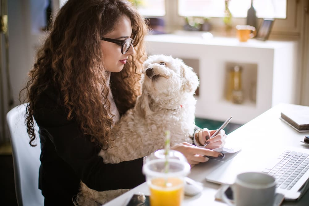 Resident working on her laptop with her dog on her lap at 21 Rio in Austin, Texas