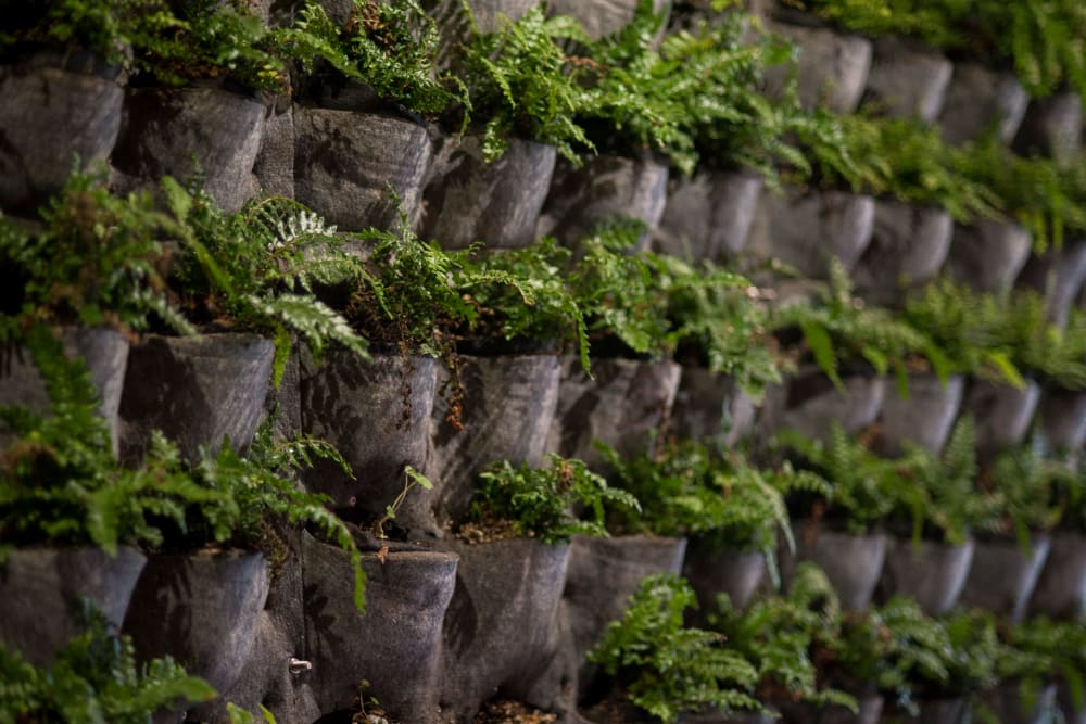 Plant walls throughout common areas at Brooklyn Yard in Portland, Oregon