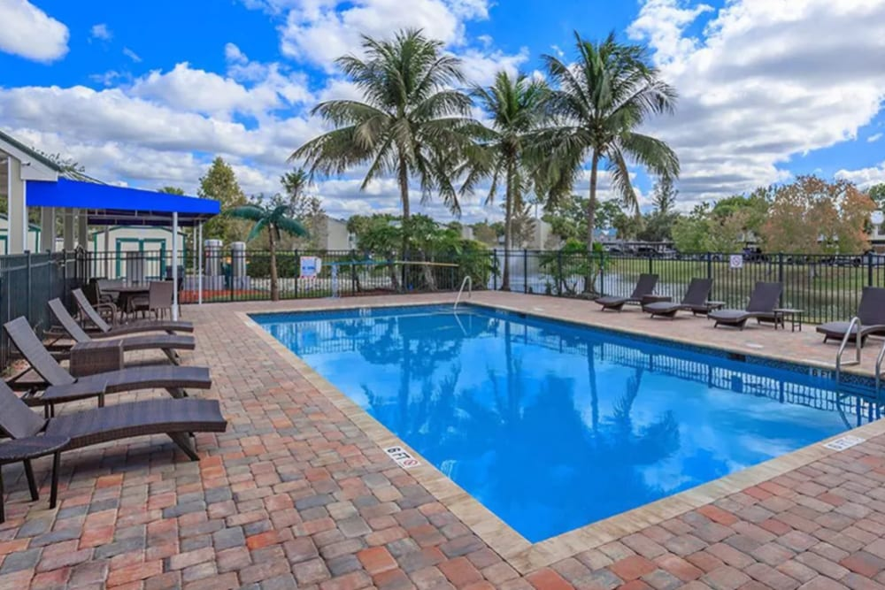 Chaise lounge chairs and palm trees around the pool at The Coast of Naples Florida in Naples, Florida