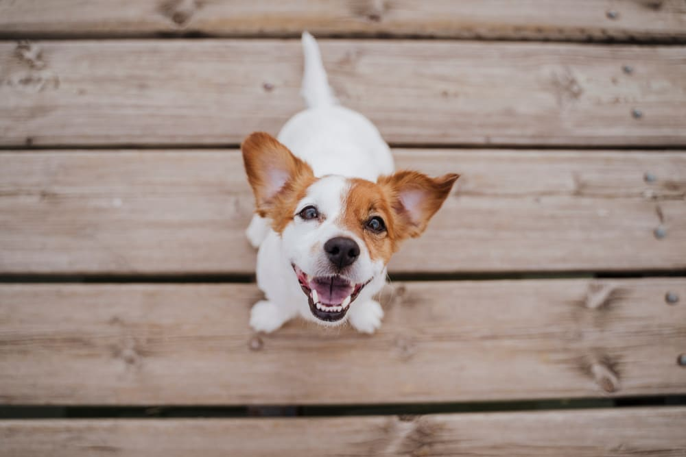 Happy dog at City View Apartments in Nashville, Tennessee