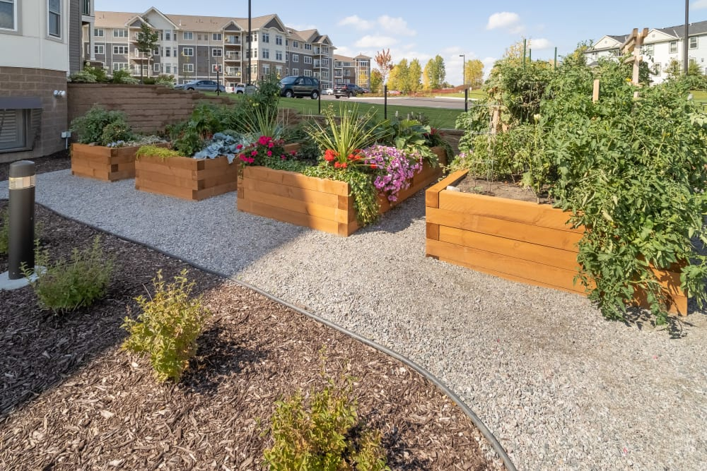 Raised Garden Plots at Applewood Pointe Maple Grove at Arbor Lakes