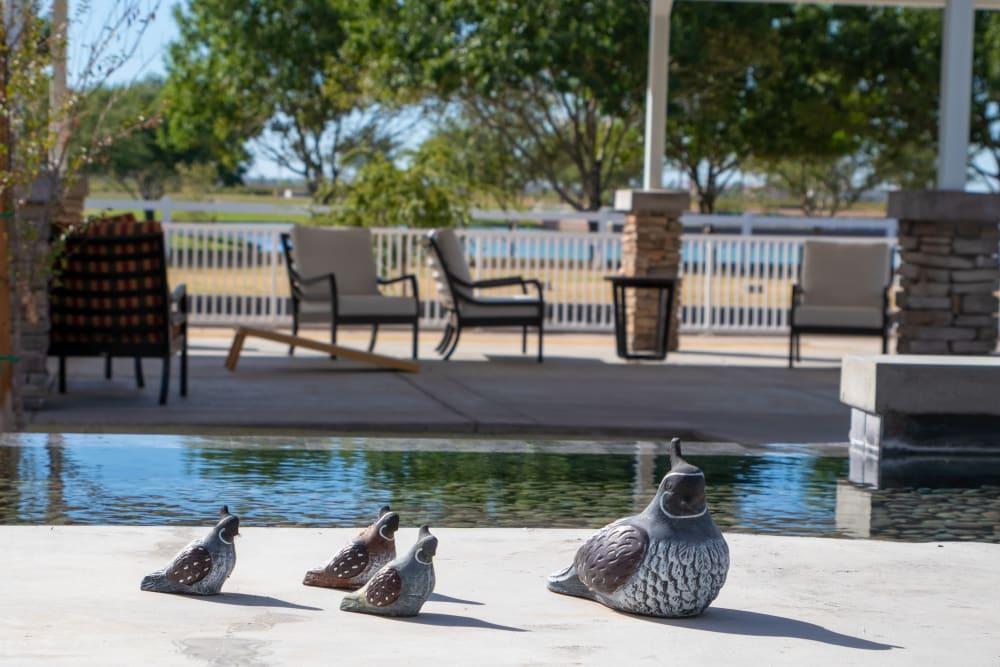 Quails by the fountain at Quail Park at Morrison Ranch in Gilbert, Arizona