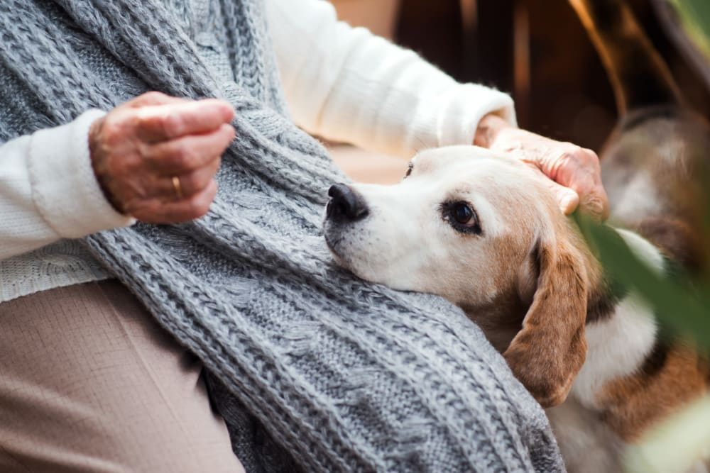 Small dog getting pet by a senior at Orchard Park in Clovis, California