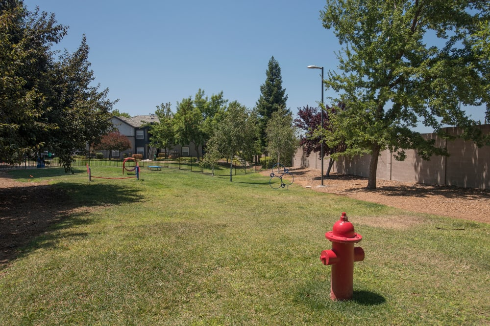 Have fun with your furry friend in the dog park at Avion Apartments in Rancho Cordova, California