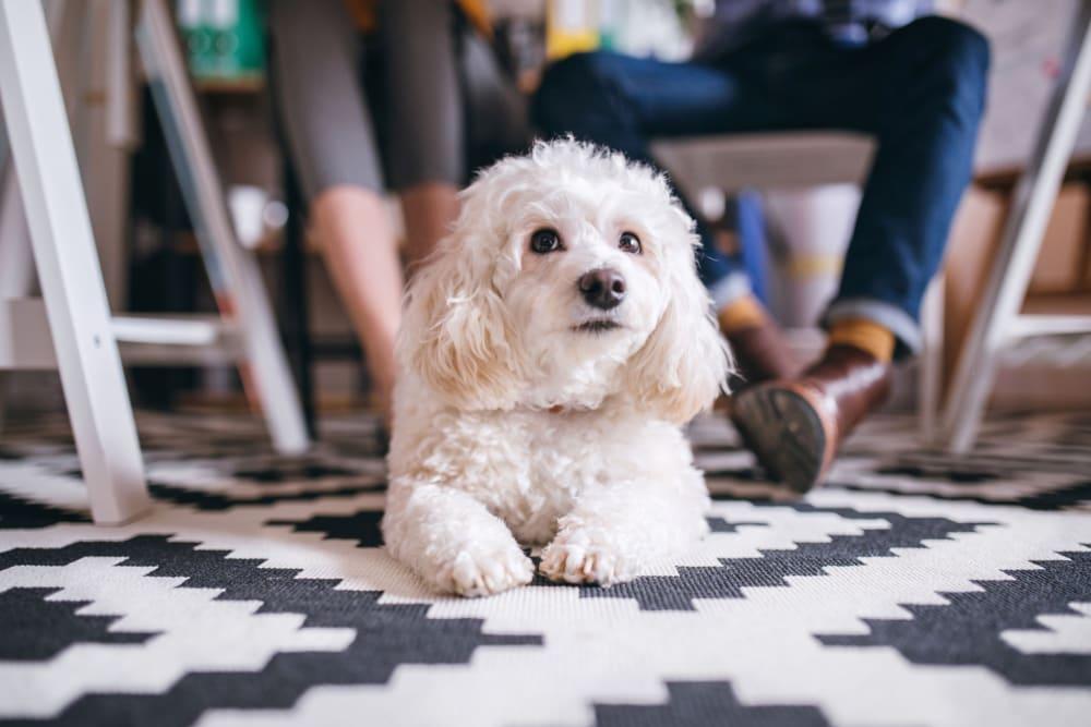 Happy dog at Campus Commons Senior Living in Sacramento, California
