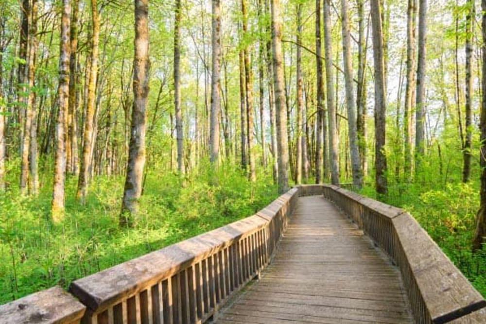 A walking path near Pine Rock Manor in Warner, New Hampshire