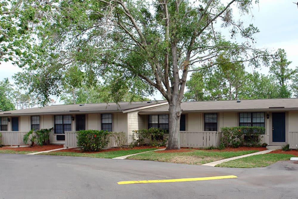 Large trees surrounding Wingwood Apartments in Orlando, Florida