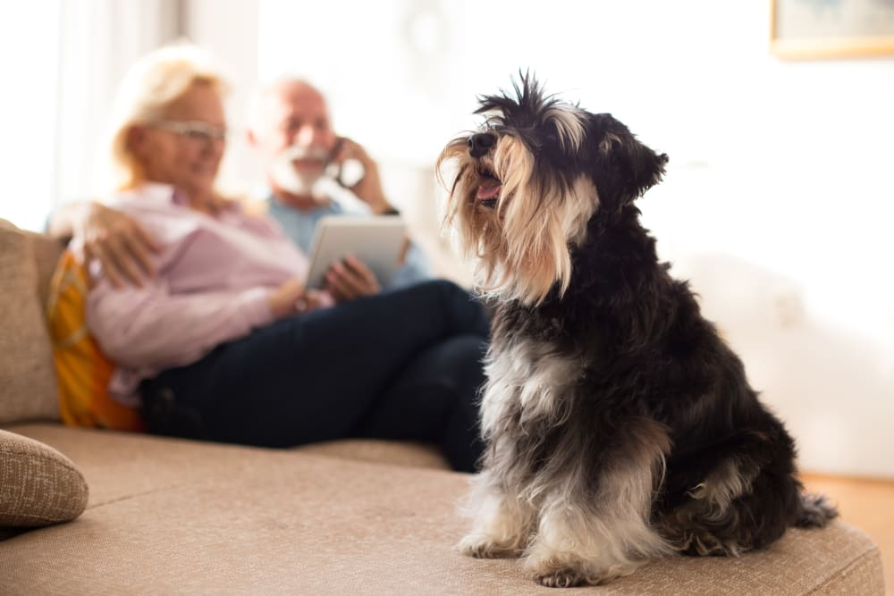 Residents and their dog at Inspired Living Delray Beach in Delray Beach, Florida