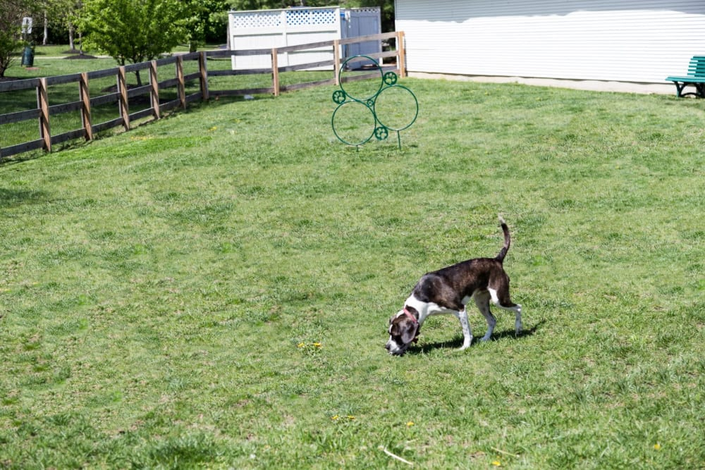 Dog park for residents at The Preserve at Beckett Ridge Apartments & Townhomes in West Chester, Ohio