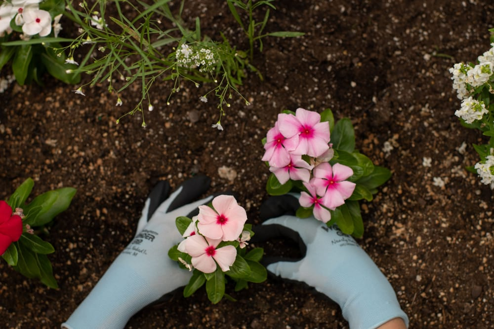 Resident planting flowers at Elk Meadows Assisted Living and Memory Care in Oakley, Utah